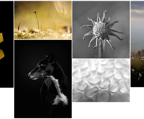 Gallery view sm.png