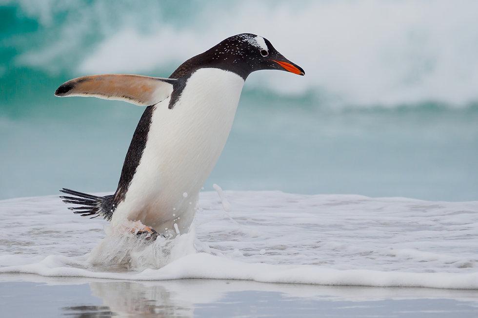 Brenda-penguin.jpg