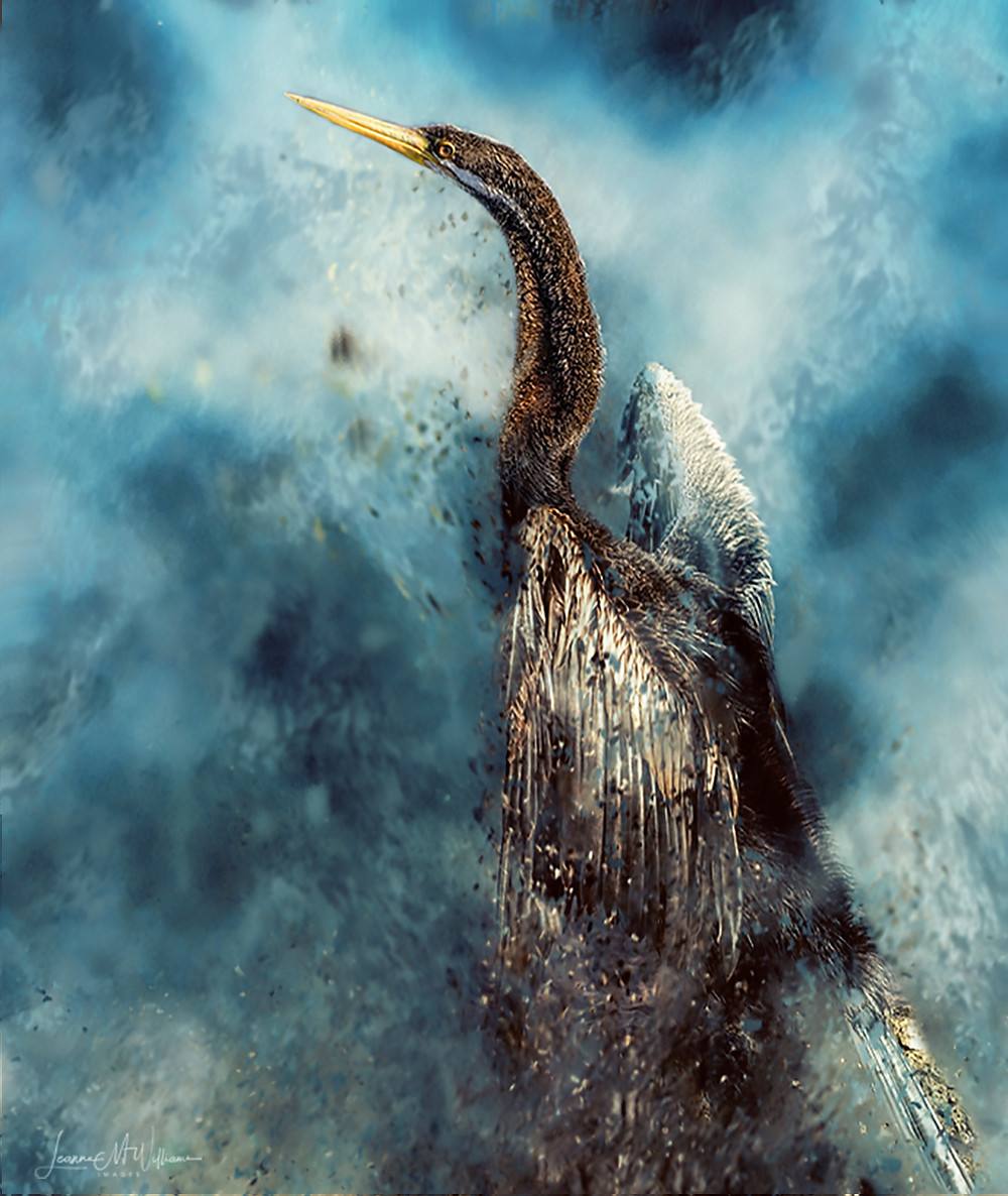 "Australian ""Arty"" Darter by photo-artist Leanne Williams (Australia) from the ""Painting"" Creative challenge."