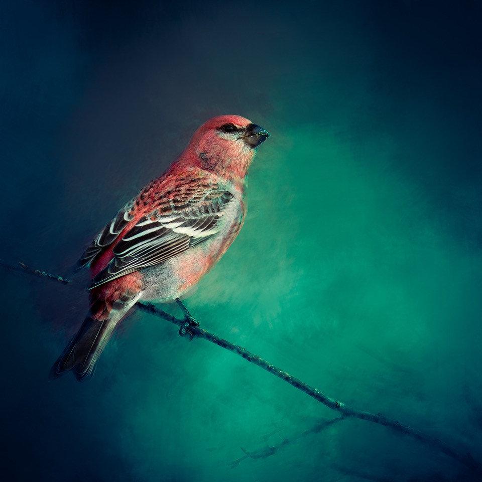 Gail-bird.jpg