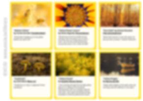 Yellow cards 2.jpg
