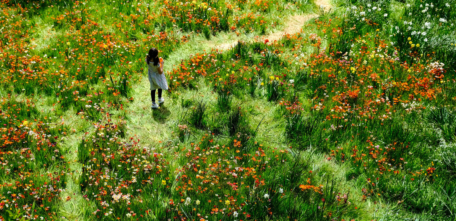 Flower Girl by Trish Brennan