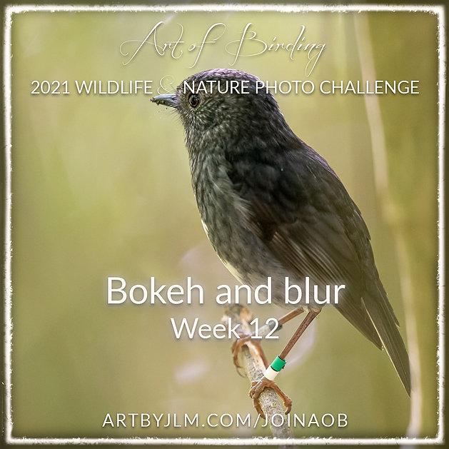 AoB2021_Week_12.jpg