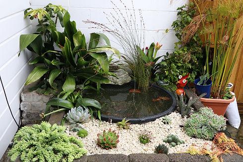 Succulents garden maintenance advice