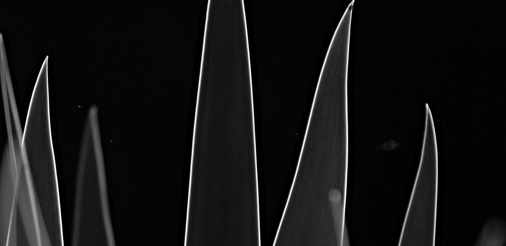 PKL Leaves by Sian Hawkins