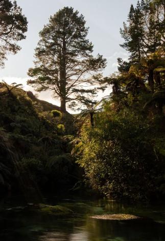 Waihou River by Jack Kingston