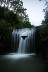 """Ascending Tui"" by Tim Ashby-Peckham. ""A plywood cutout of a tui suspended in front of the Oakley Creek waterfall in Auckland with spring. The light from it's neck comes from a little torch."""
