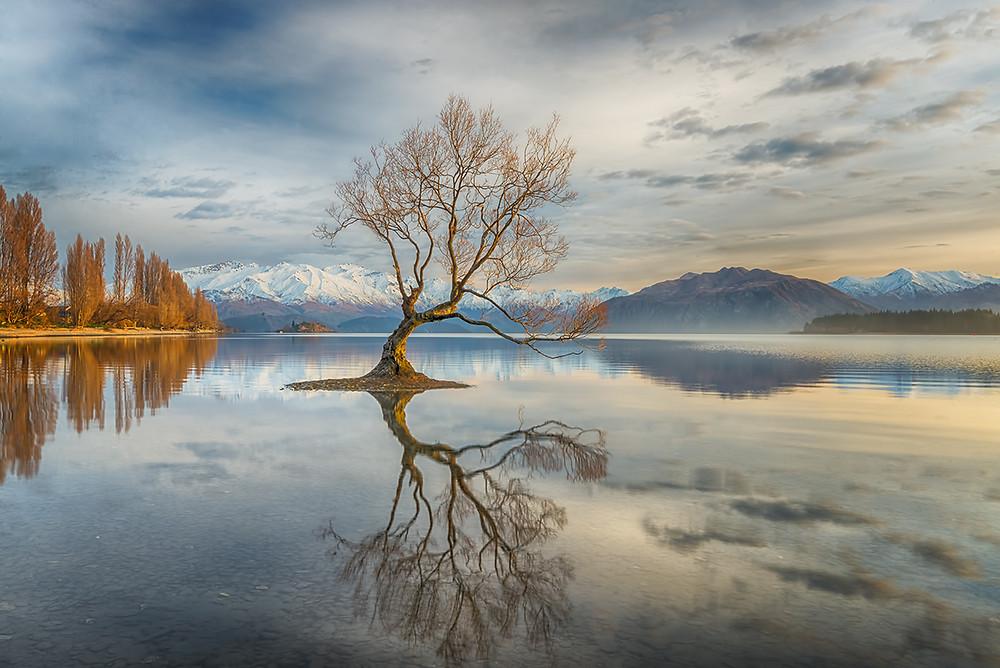 """""""Wanaka Tree"""" by Linda Cutche"""