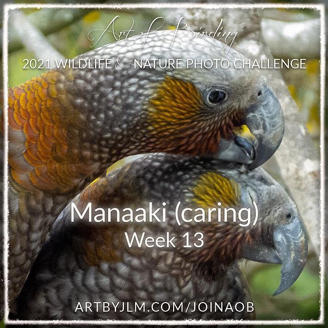 AoB2021_Week_13.jpg
