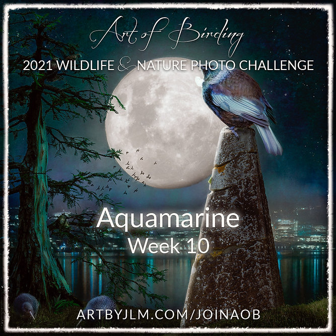 AoB2021_Week_10.jpg