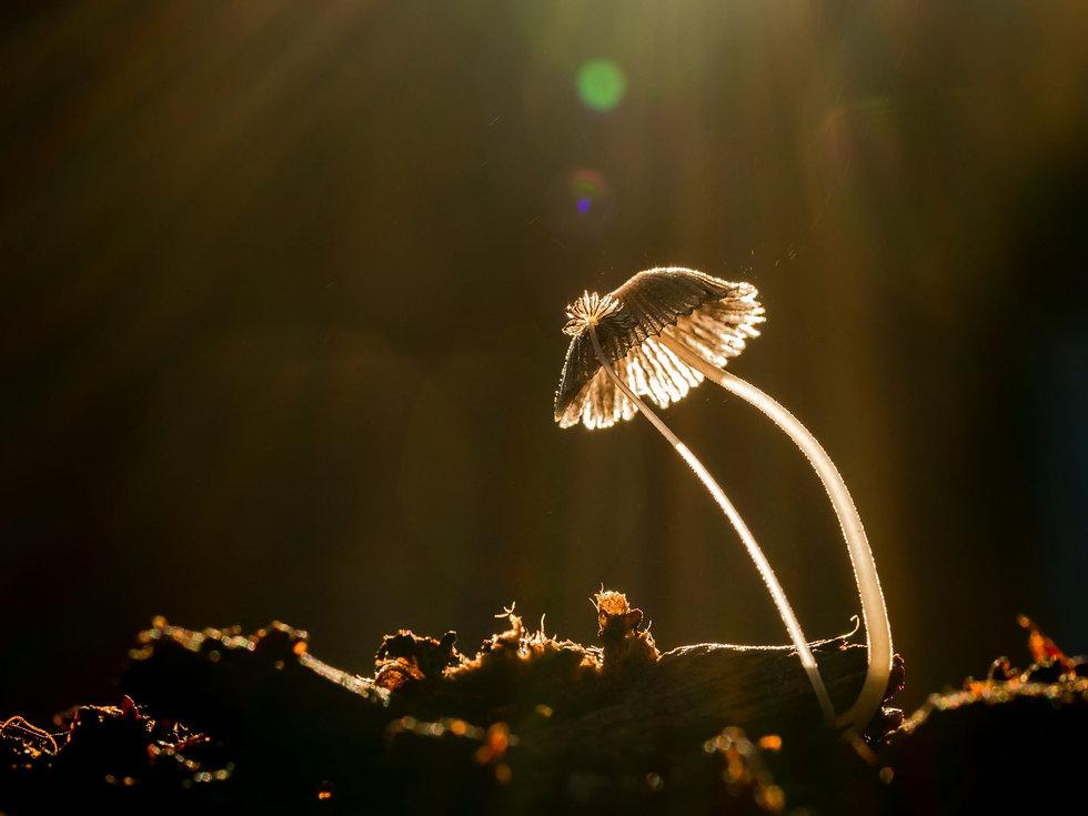 Damon - Delicate mushroom fungi.jpeg