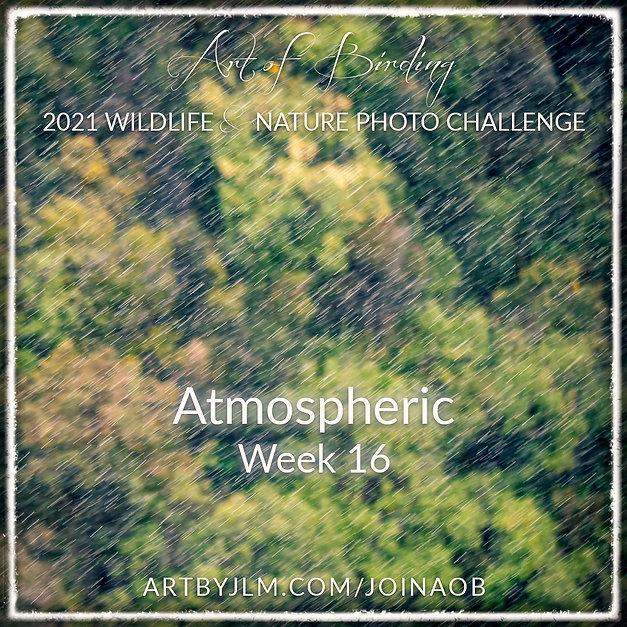 AoB2021_Week 16.jpg