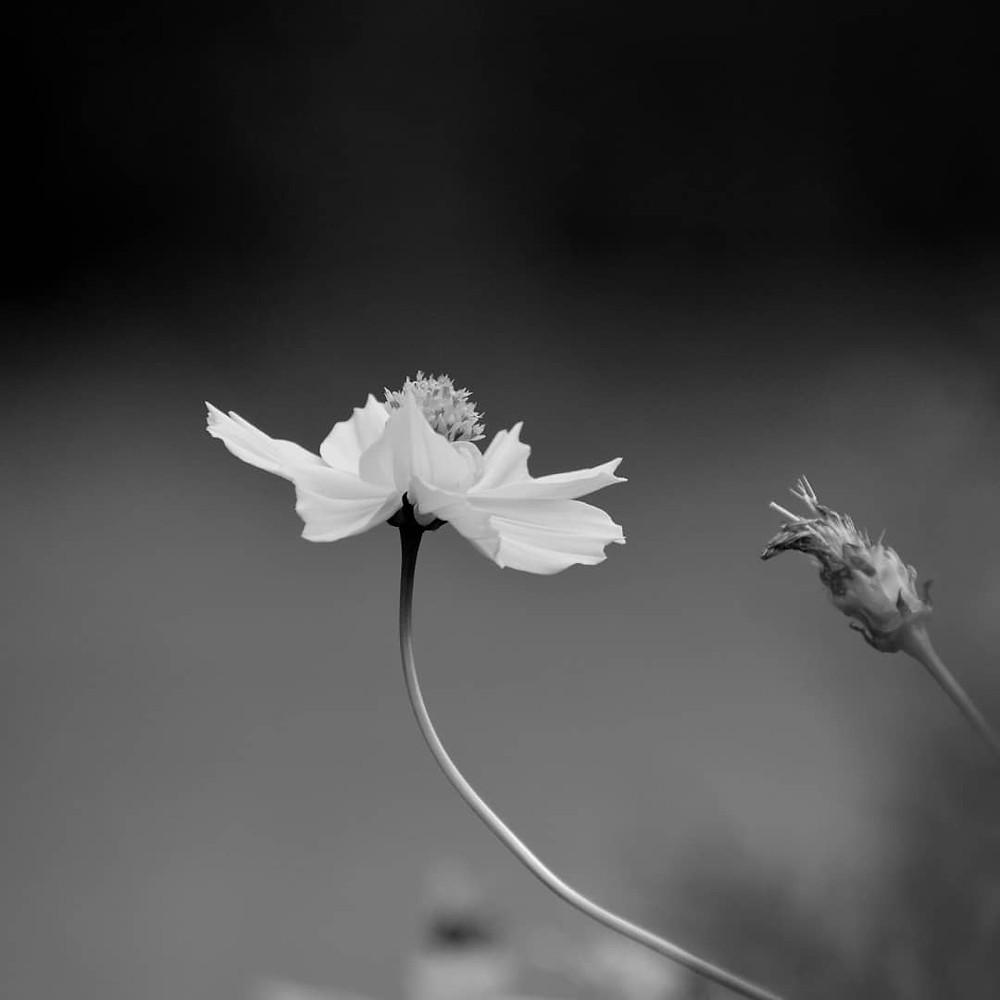 Monochromed Flower by Amol Nakve