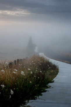 Curving into the mist