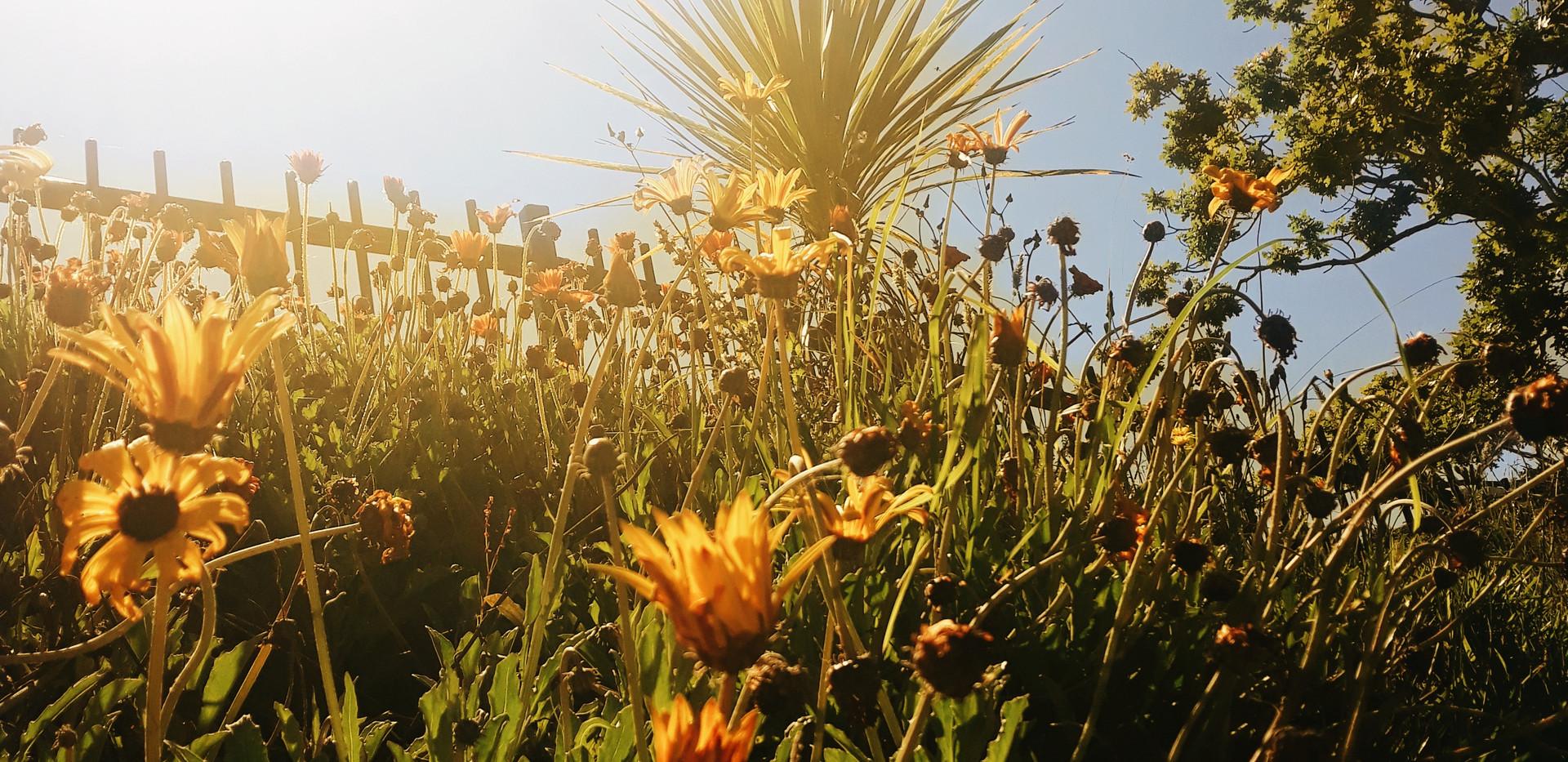 Flower Sunrise by Pete Malkin