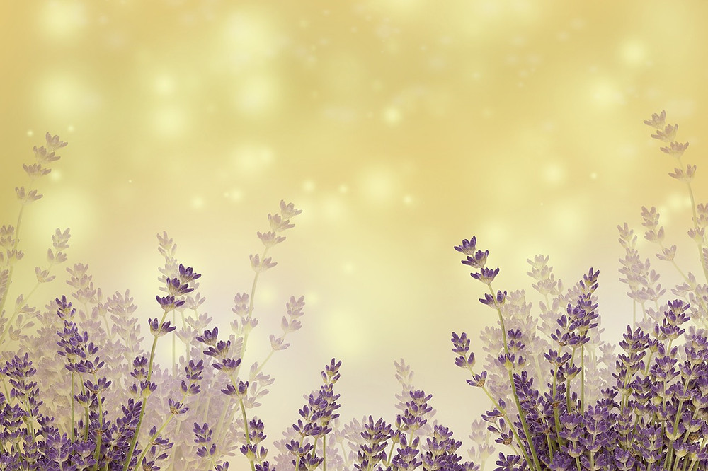 atmospheric healing lavender plants