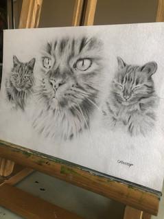 verity cat1.jpg