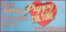Puppy Culture puppies