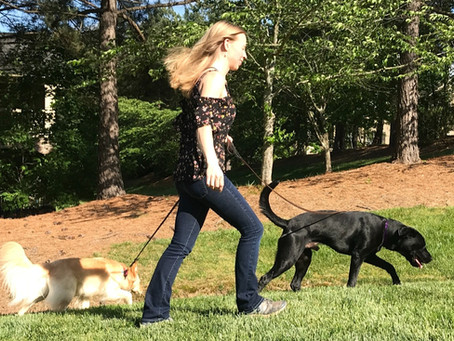 Top Tips for Leash Reactive Dogs