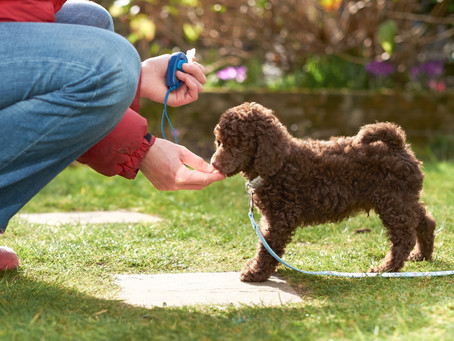 Two Keys to Housetraining Your Puppy