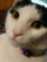 cat saved financial assistance