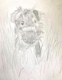 guinea pig 2.jpg