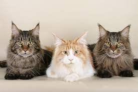 3 cat.jpg