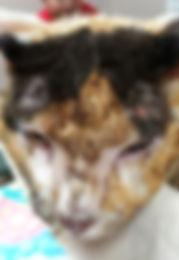 cat burned face