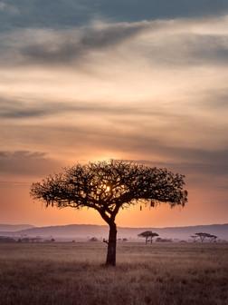 africa9.jpg