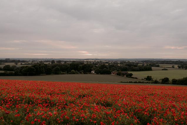 poppy field at sunset uk