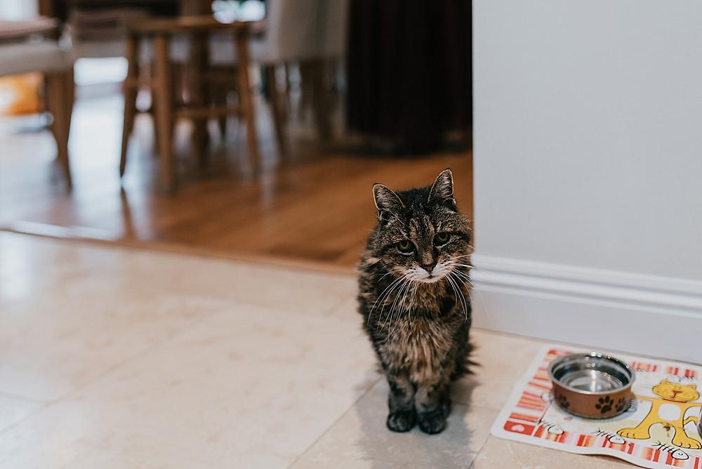 curious cat at trial prep