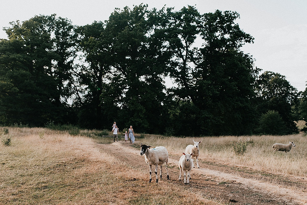family photoshoot sheep