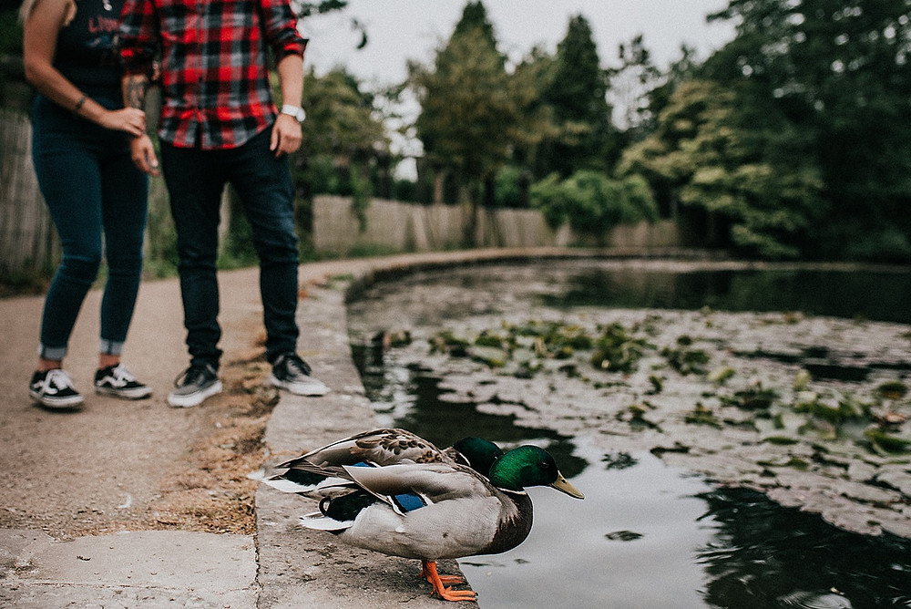 couple photoshoot with ducks