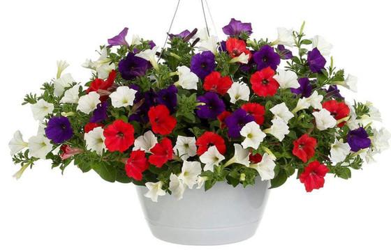 2019 Flower Basket Fundraiser RFP