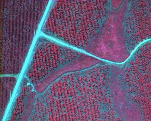 Near Infrared NIR Aerial Imagery