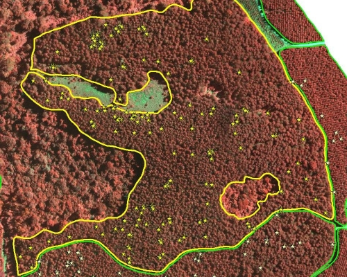 Wasp Infestations Mapping