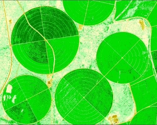 Sugar Cane Field NDVI Mapping
