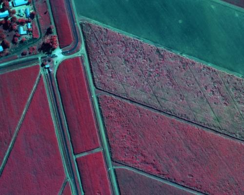 Sugar Cane Near Infrared NIR Imagery