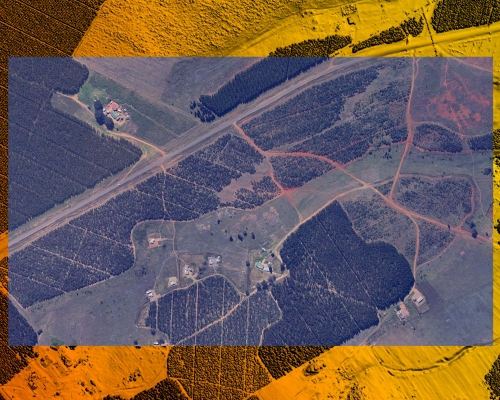 Forest Aerial LiDAR and Imagery Overlay