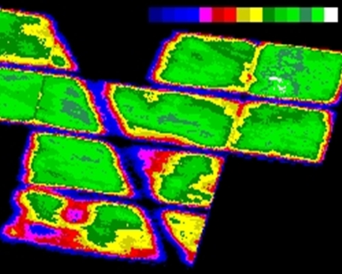NDVI Algorithm Mapping
