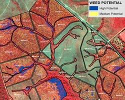 Forest Weed Mapping