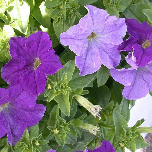Essencia Silver Flores e Folhas - 380122