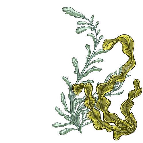 Essência Tradicional Algas Marinhas 100ml 010003