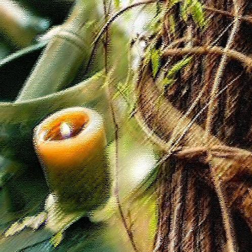 Essencia Vela Cascas e Folhas - 420029