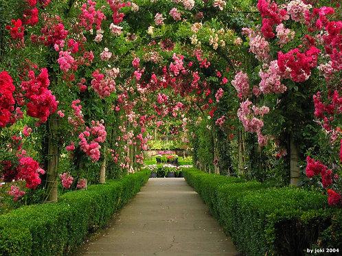 Essencia Jardim de Rosas Silver- 380055