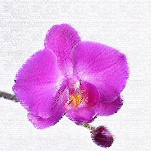 Essencia Tradicional Orquidea 100ml 010060