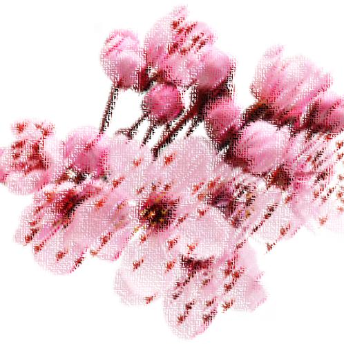 Essencia Flor de Cerejeira Primtemps- 010114