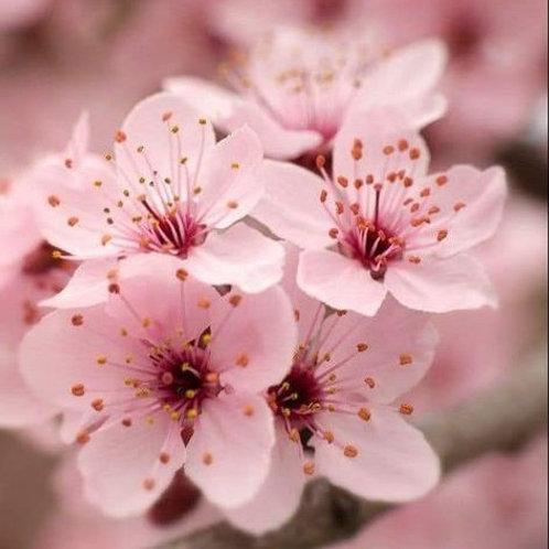 Essencia Silver Cherry Blosson PP- 380143