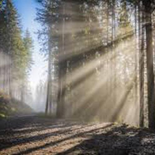 Essencia Silver Floresta Inverno Locc - 380044