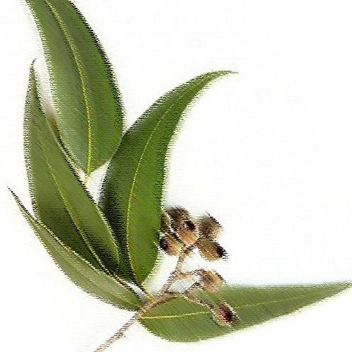 Essencia Eucalipto Globulos Tradicional 100ml 010029